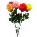 Роза ОР01