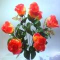 Роза Р60