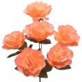 Роза Р91