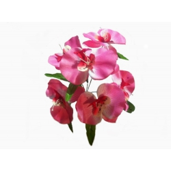 Орхидея ОРХ04