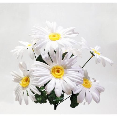 Купить цветы оптом ромашки цветы саженцы и семена купить