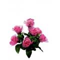 Роза Р17