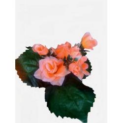 Роза РЗ04