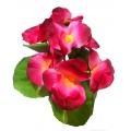 Орхидея ОРХЗ01