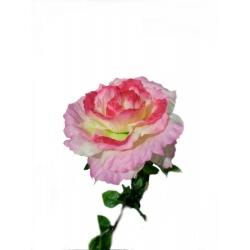 Роза ВР01