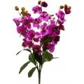 Орхидея ОРХ11
