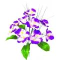 Орхидея ОРХ13