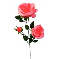 Роза ВР5