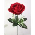 Роза ОР03