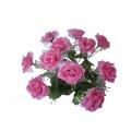 Роза РФ01