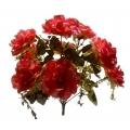 Роза Р49
