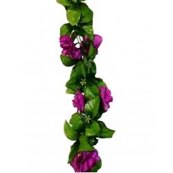 Роза бархат ВРБ01