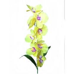 Орхидея ВОРХ01